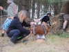 2013-bow-camp-bsv-hohe-heide-0140