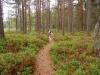 Wanderwege führen durch das Gelände