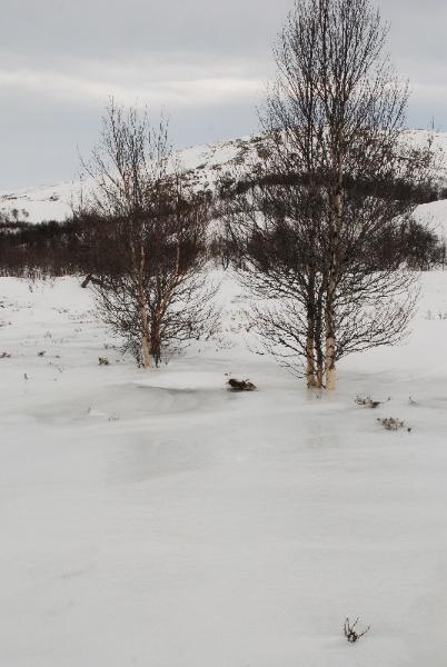 rondane-wintertour-161