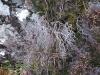 2012-schottland-auslandsjagd-0100