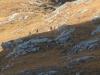 2012-schottland-auslandsjagd-136