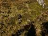 2012-schottland-auslandsjagd-167