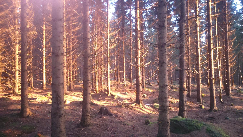 Schierke Harz Camping a006