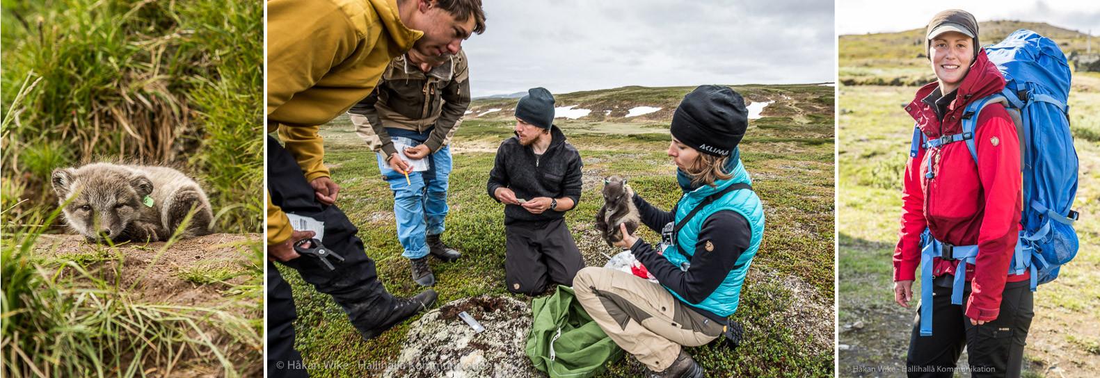 Von Fjäll Räven finanziertes Forschungsprojekt in Lappland